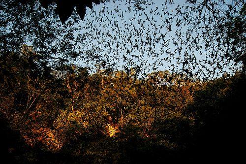 Bat Cave Calakmul Campeche