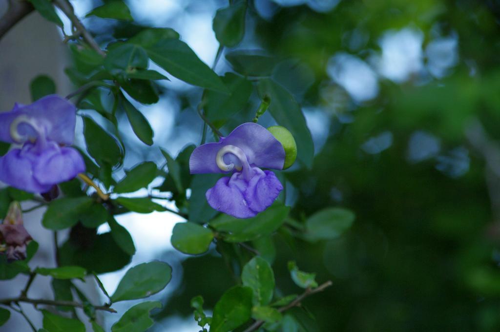 Garden Blue Orchids Rio Bec Dreams Hotel in Calakmul