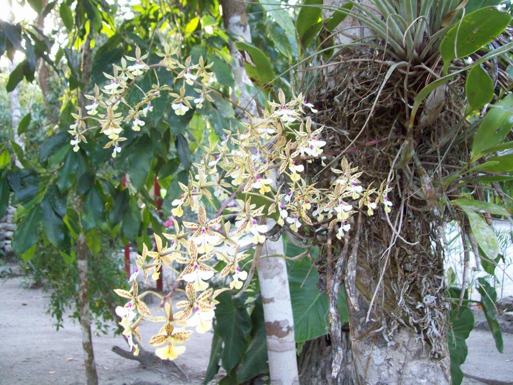 Garden Orchids Rio Bec Dreams Hotel in Calakmul