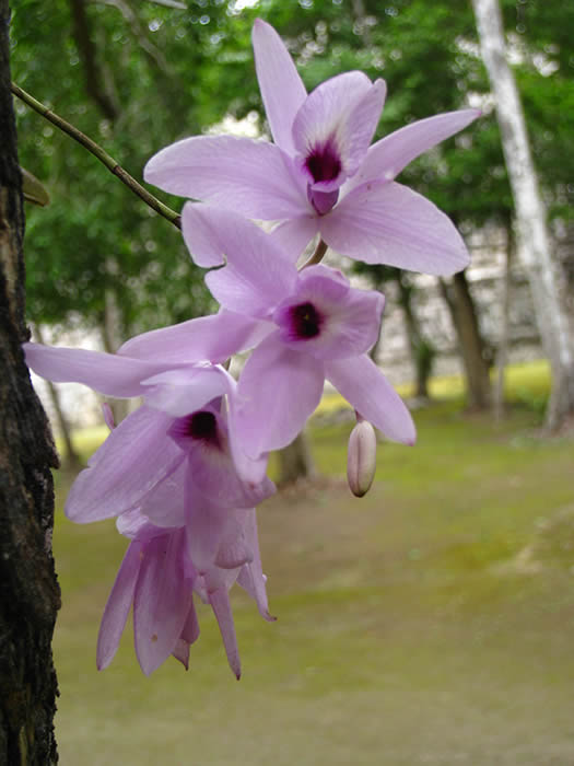 Orchids Rio Bec Dreams Hotel in Calakmul
