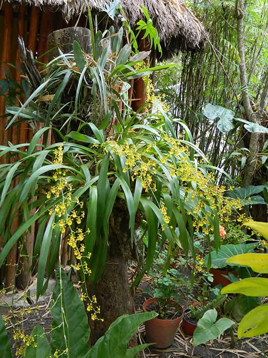 Plants Rio Bec Dreams Hotel in Calakmul