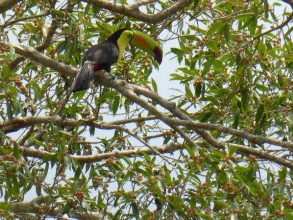 Toucan Tree Rio Bec Dreams Hotel in Calakmul